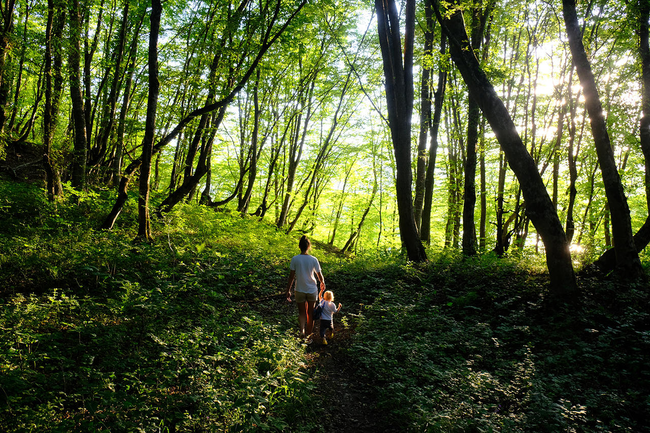 two kids walking through green canopy forest