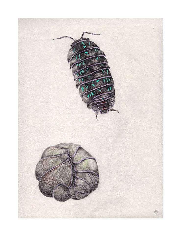 garden doodle bug drawings by Kristin Maija Peterson