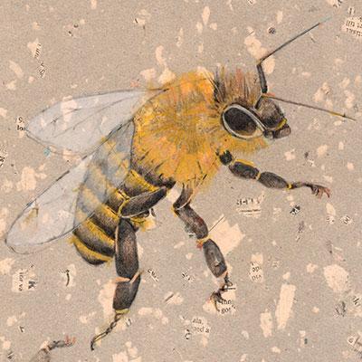 drawing-mixed media of honey bee on handmade paper