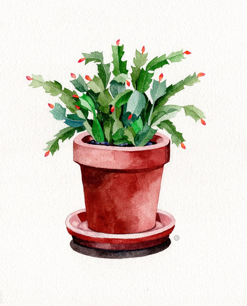 watercolor-vs-gouache-cactus2